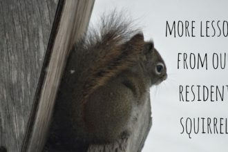 More lessons from the squirrel that lives in our yard